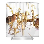 Img_0001 - Mourning Dove Shower Curtain