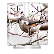 Img_0001 - Tufted Titmouse Shower Curtain