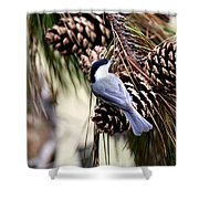 Img_0215-022 - Carolina Chickadee Shower Curtain