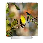Img_0237 - Pine Warbler Shower Curtain