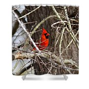 Img_0806 - Northern Cardinal Shower Curtain