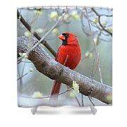 Img_0999-001 - Northern Cardinal Shower Curtain