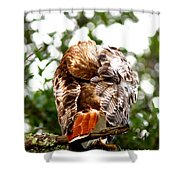 Img_1049-006 - Red-tailed Hawk Shower Curtain