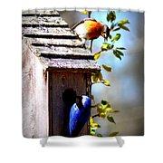 Img_1154 - Eastern Bluebird Shower Curtain