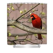 Img_1180-001 - Northern Cardinal Shower Curtain