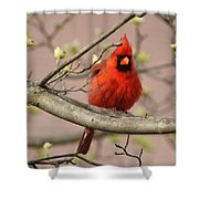 Img_1211-001 - Northern Cardinal Shower Curtain