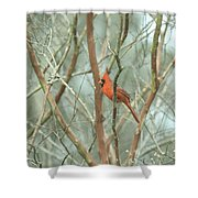 Img_1273-003 - Northern Cardinal Shower Curtain