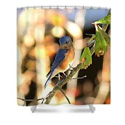 Img_145-005 - Eastern Bluebird Shower Curtain