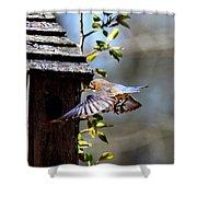 Img_1753-001 - Eastern Bluebird Shower Curtain