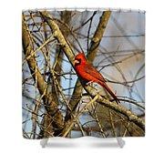 Img_2757-001 - Northern Cardinal Shower Curtain