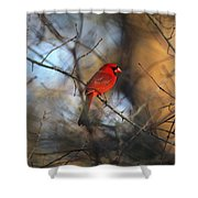 Img_2866-001 -  Northern Cardinal Shower Curtain
