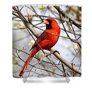 Img_2902-004 - Northern Cardinal Shower Curtain