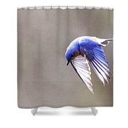 Img_4138-003 - Eastern Bluebird Shower Curtain