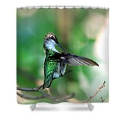 Img_4595-004 - Ruby-throated Hummingbird Shower Curtain