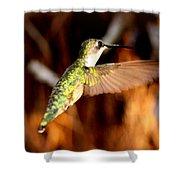 Img_4625 - Ruby-throated Hummingbird Shower Curtain