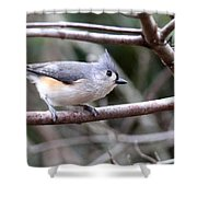 Img_4672 - Tufted Titmouse Shower Curtain
