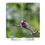 Img_5271-001 - Ruby-throated Hummingbird Shower Curtain