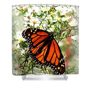Img_5284-001 - Butterfly Shower Curtain