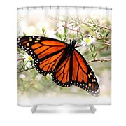 Img_5290-004 - Butterfly Shower Curtain