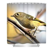 Img_5993 - Ruby-crowned Kinglet Shower Curtain