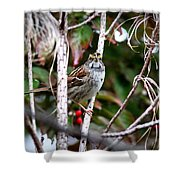 Img_6624-002 - White-throated Sparrow Shower Curtain