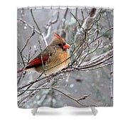 Img_6770 - Northern Cardinal Shower Curtain
