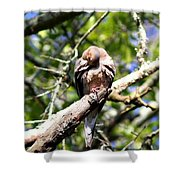 Img_7276 - Mourning  Dove Shower Curtain