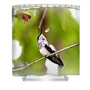 Img_7436-020 - Ruby-throated Hummingbird Shower Curtain