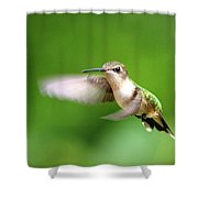 Img_7512 - Ruby-throated Hummingbird Shower Curtain