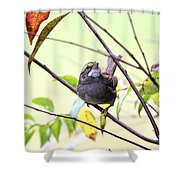 Img_7541-002 - White-throated Sparrow Shower Curtain