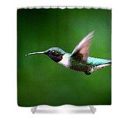 Img_7668-003 - Ruby-throated Hummingbird Shower Curtain