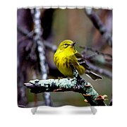 Img_8197-001 - Pine Warbler Shower Curtain