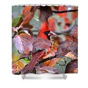 Img_ 8621 - Northern Cardinal Shower Curtain