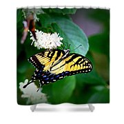 Img_8712-001 - Swallowtail Butterfly Shower Curtain