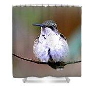 Img_8835 - Ruby-throated Hummingbird Shower Curtain