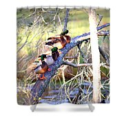 Img_8884-002 - Mallard Shower Curtain
