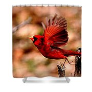 Img_8892 - Northern Cardinal Shower Curtain