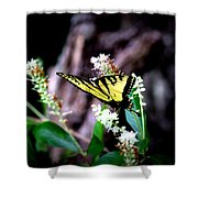 Img_8960 - Tiger Swallowtail Butterfly Shower Curtain