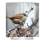 Img_9256 - Carolina Wren Shower Curtain