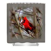 Img_9241 - Northern Cardinal Shower Curtain