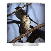 Img_9896 - Yellow-rumped Warbler Shower Curtain