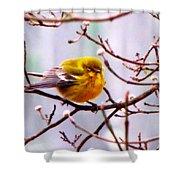 Img_9900 - Pine Warbler Shower Curtain