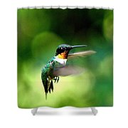 Img_9985-001 - Ruby-throated Hummingbird Shower Curtain