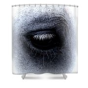 Img_9999 - Horse Shower Curtain