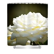 Immaculate Rose Shower Curtain