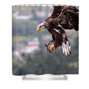 Immature Bald Eagle Landing Shower Curtain