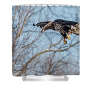 Immature Eagle Wheels Down Shower Curtain