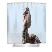 Immature Great Blue Heron Sticks Toungue Out Shower Curtain