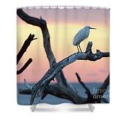Immature Heron Glow Shower Curtain