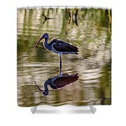 Immature White Ibis At Sunrise Shower Curtain